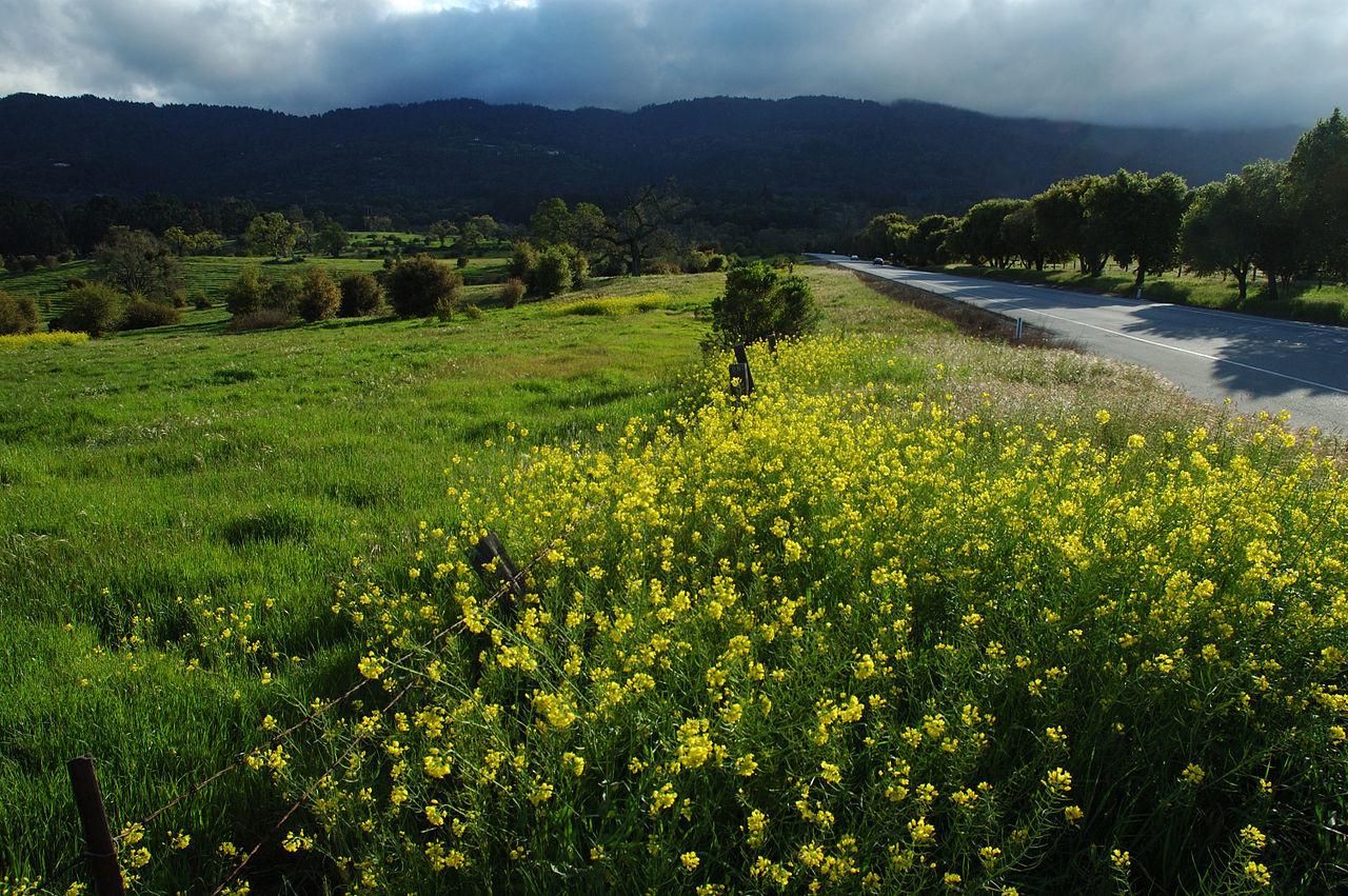 Portola Valley | Heidi Maierhofer, Realtor